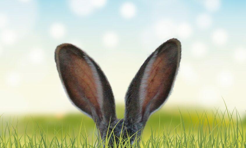 nekupujte zajíce v pytli